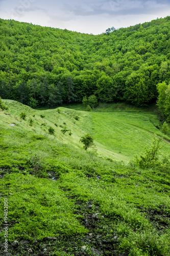 Fotobehang Pistache a forest landscape