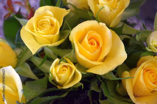 żółte róże jako bukiet na wiosnę