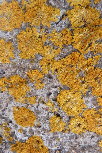Foto op Canvas Stenen moss orange red on gray concrete close-up mold abstract pattern back wall concrete floor