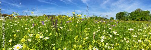 Łąka z kolorowymi kwiatami