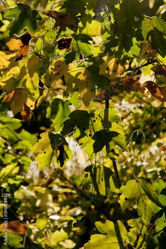 Plexiglas Herfst Autumn leafs.