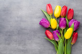 Fototapety Multicolored spring flowers, tulip on a gray background.