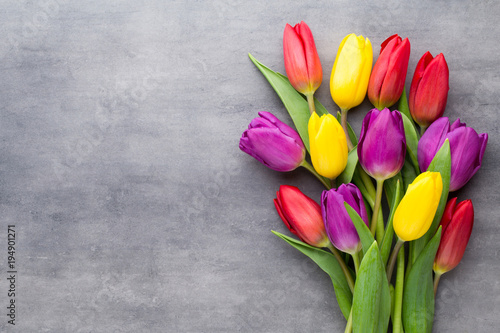 Wall mural Multicolored spring flowers, tulip on a gray background.