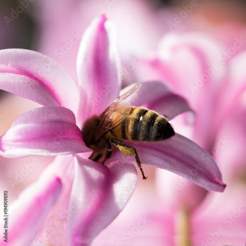 Fotobehang Bee Biene
