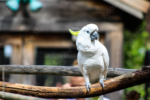 Aluminium Papegaai Cockatoo on branch