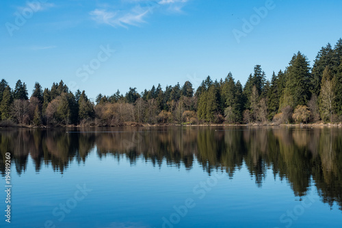 Fotobehang Blauw forest and blue sky cast reflection on calm lake