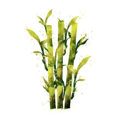 Bamboo on white background. Watercolor illustration