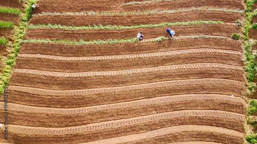Fotobehang Rijstvelden Farmer working on the red onion terraced field