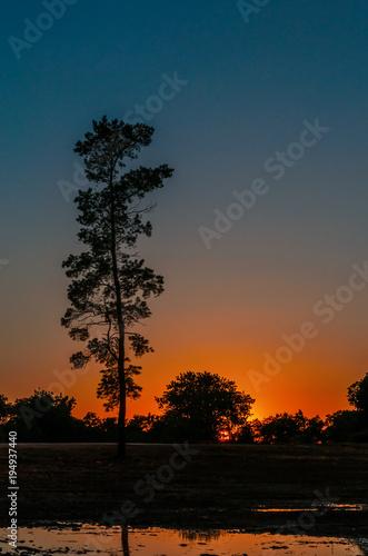 Aluminium Zwart Black silhouette of high pine on a red blue sunset background