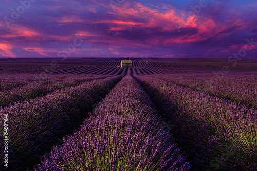 Fotobehang Violet Lavender field with sunset
