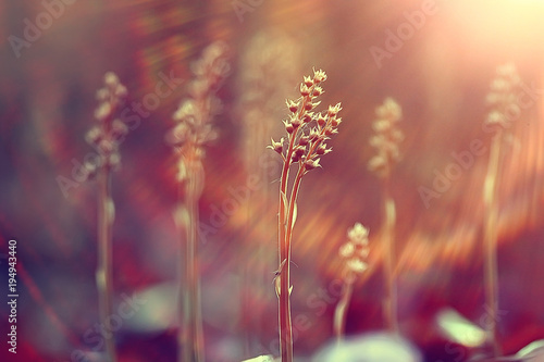Tuinposter Natuur vintage background little flowers, nature beautiful, toning design spring nature, sun plants