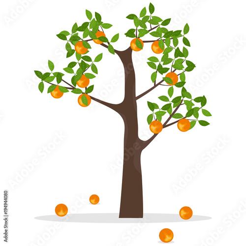 Orange tree, a tree with oranges. Ripe oranges hang on a tree - 194944080