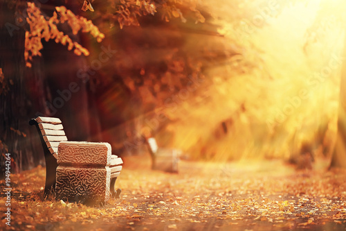 Tuinposter Herfst autumn landscape / sunrays in autumn trees. Sunset in the forest with yellow leaves. Indian summer for a walk in the autumn park. Glare and sun rays concept of landscape in nature