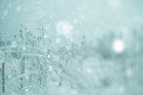 Fotobehang Lichtblauw Winter forest blurred background snow landscape