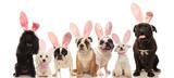 Group Of Cute Dogs Wearing Easter Bunny Ears Wall Sticker