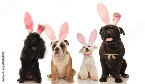 Plexiglas Hoogte schaal four adorable dogs wearing easter bunny ears