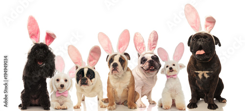 Keuken foto achterwand Franse bulldog group of cute dogs wearing easter bunny ears