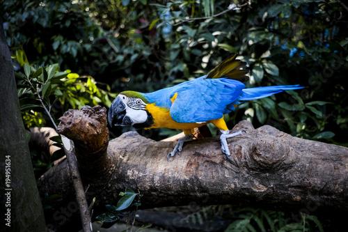 Aluminium Papegaai Parrots kept in the zoo