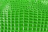 Background of green crocodile skin texture.