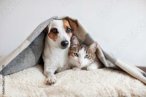 Dog and cat together - 194955015