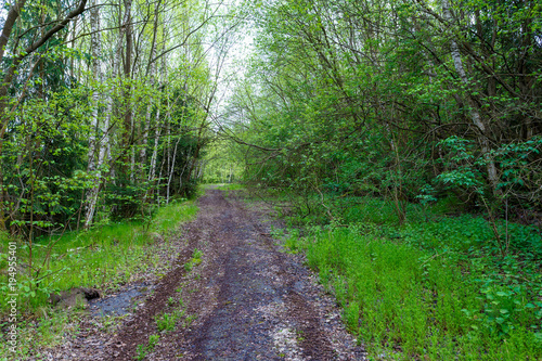 Aluminium Groene countryside rural forest path