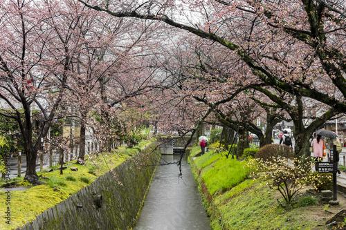 Papiers peints Kyoto Beautiful sakura cherry blossoms during the hanami in Tetsugaku-no-michi (Philosopher's Walk), Kyoto, Japan