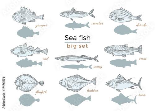 Set of sea fish. Seafood. Vector sketch