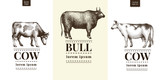 Graphical cow and bull silhouette, hand drawn vintage illustrations. Vector set with three logo templates.