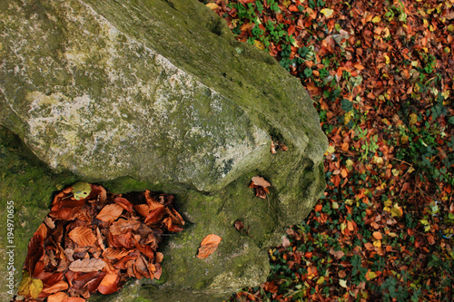 Aluminium Betoverde Bos Big stones with moss and trees in foggy forest, background. landscape. autumn.