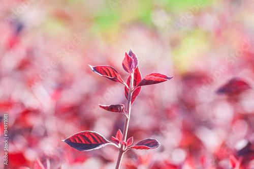 Papiers peints Rose clair / pale Colorful flower in the garden.