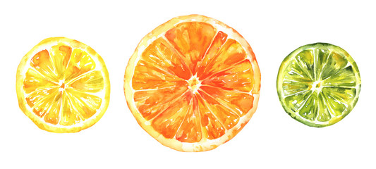 Watercolour citrus fruits, lemon, orange and lime, hand drawing, isolated on white © laplateresca
