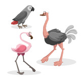 Cartoon trendy style african birds  set. Grey parrot, ostrich and flamingo. Closed eyes and cheerful mascots. Vector wildlife illustrations. - 194977092