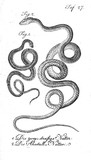 Illustration of a snake. - 194979022