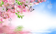 Flowers background with amazing spring sakura with butterflies. Flowers of cherries. - 194981043