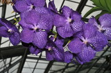 orchidée - 194981037