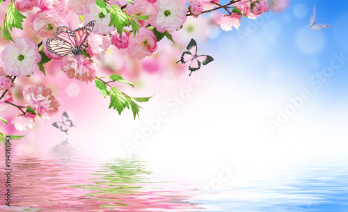 Fridge magnet Flowers background with amazing spring sakura with butterflies. Flowers of cherries.