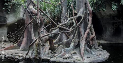 Summer natural landscape in the rainforest.
