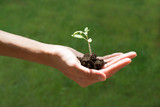 Hand holding a growing young plant isolated on white background, new life, gardening, environment and ecology concept - 194991265