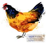 Poultry farming. Chicken breeds series. domestic farm bird  - 195005272
