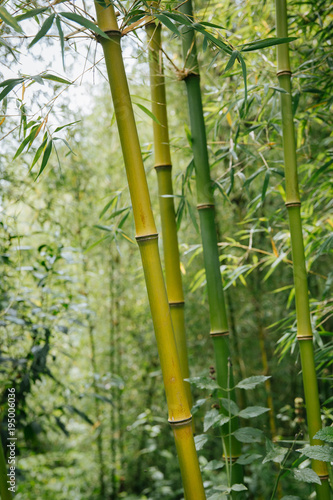 Plexiglas Bamboe bamboo forest