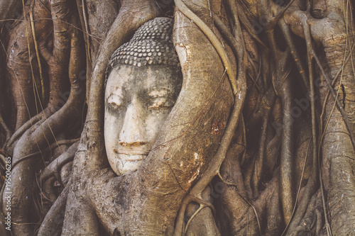 Foto op Aluminium Boeddha Wat-Mahathat Buddha head in tree roots
