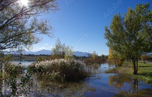 Fotobehang Lente Paysage avec des arbres le long d'un lac au printemps