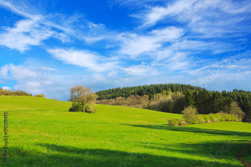 Keuken foto achterwand Blauwe hemel Green Grass Field Landscape and tree.