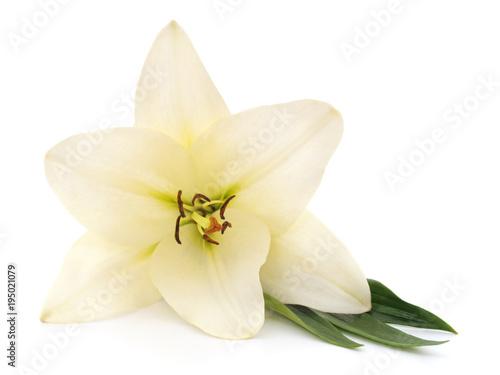 Biała lilia z liśćmi.