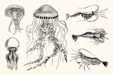 Vintage Jellyfish and Shrimp Nautical Illustrations - High Detail Vector Artwork