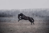 Schwarzes Pferd auf Weide - 195040885
