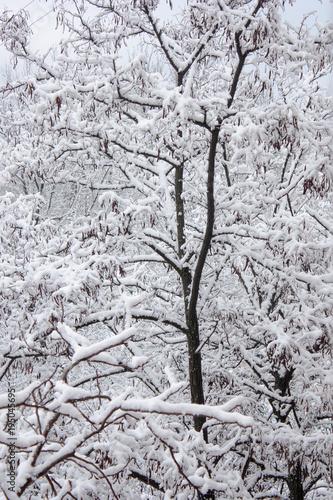Albero sotto la neve