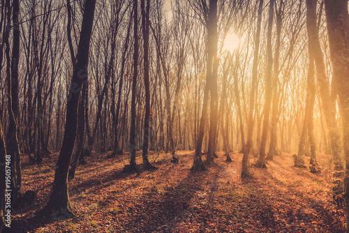 jesien-lasu-krajobraz-przy-zmierzchem