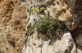 Copper mineralised rock pile, rubble tailings, close with shallow depth of field. - 195063223