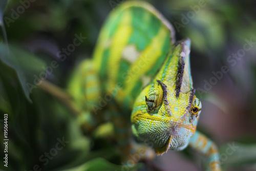 Aluminium Kameleon yellow green cameleon